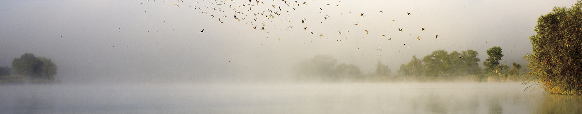 Individual Counseling at Wellspring - Birds flying as mist rolls onto lake