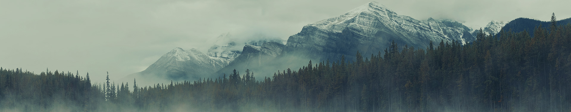 Why Wellspring - trees and mountains in the evening
